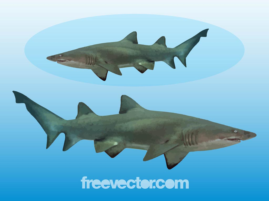 Shark Graphics