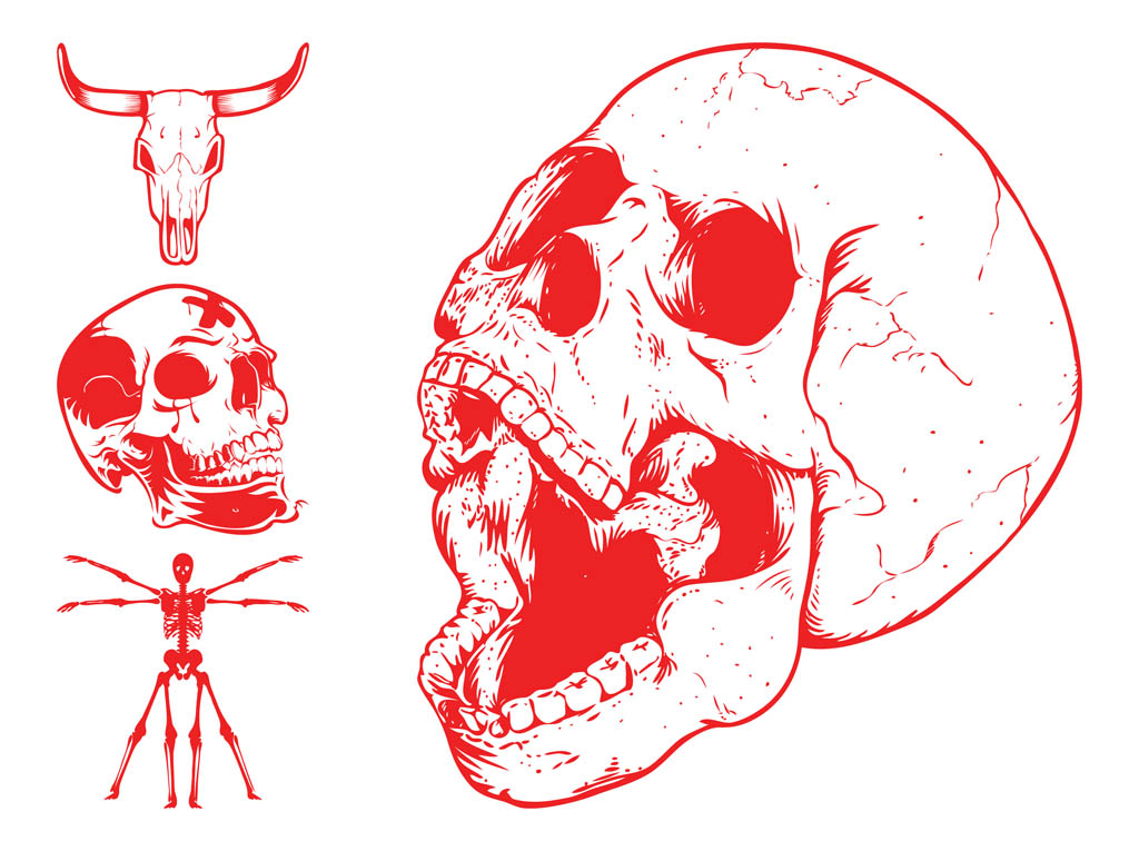Skulls And Skeleton