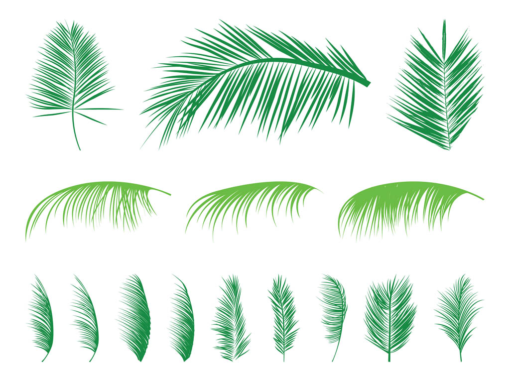 Palm Leaf  Bing images