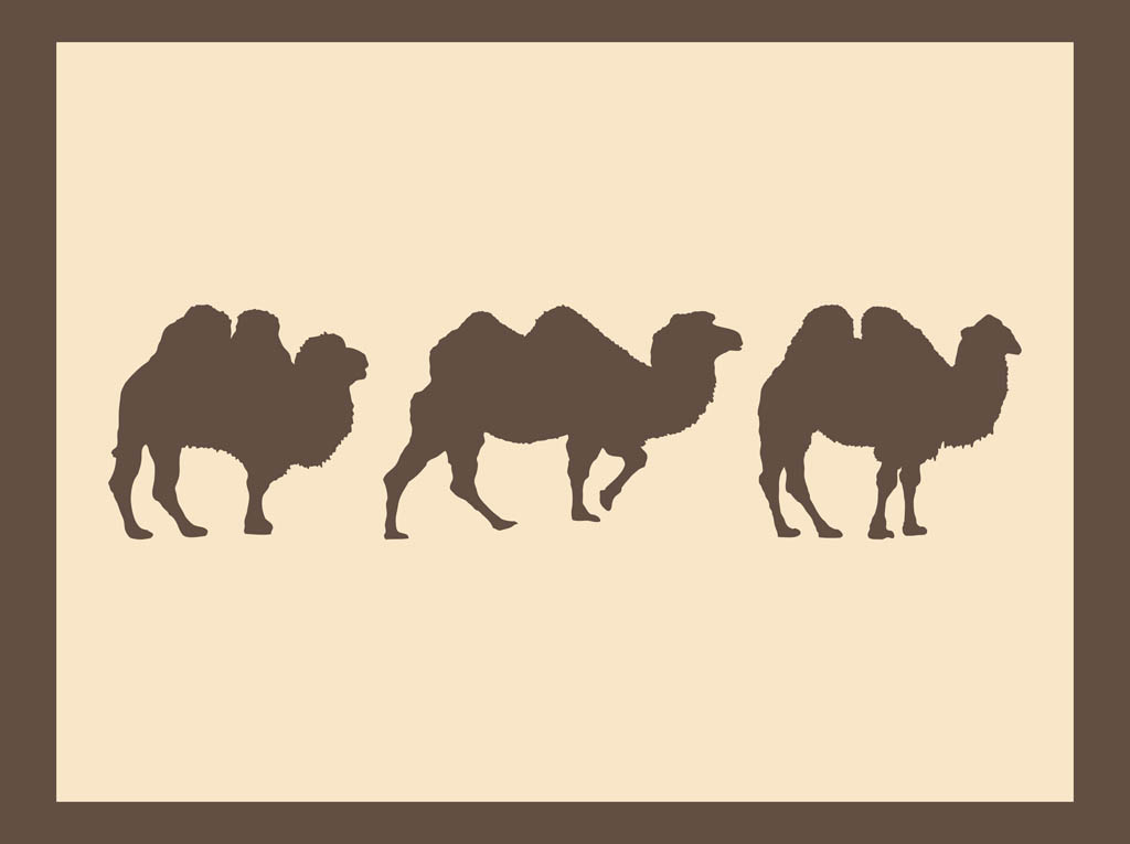 Camels Silhouettes