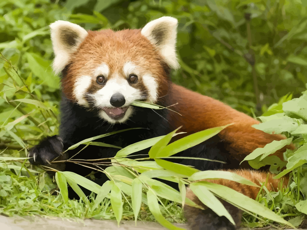 funny red panda pictures