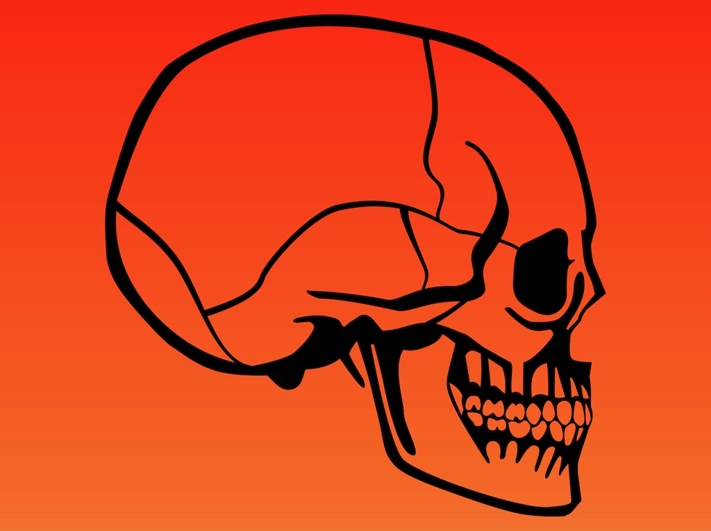 7204f588567ce Human Skull Vector Art & Graphics | freevector.com