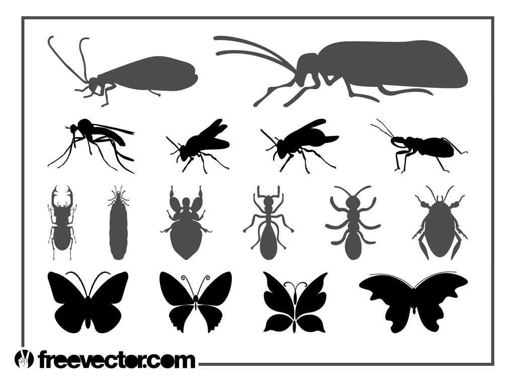 Insects Graphics Set