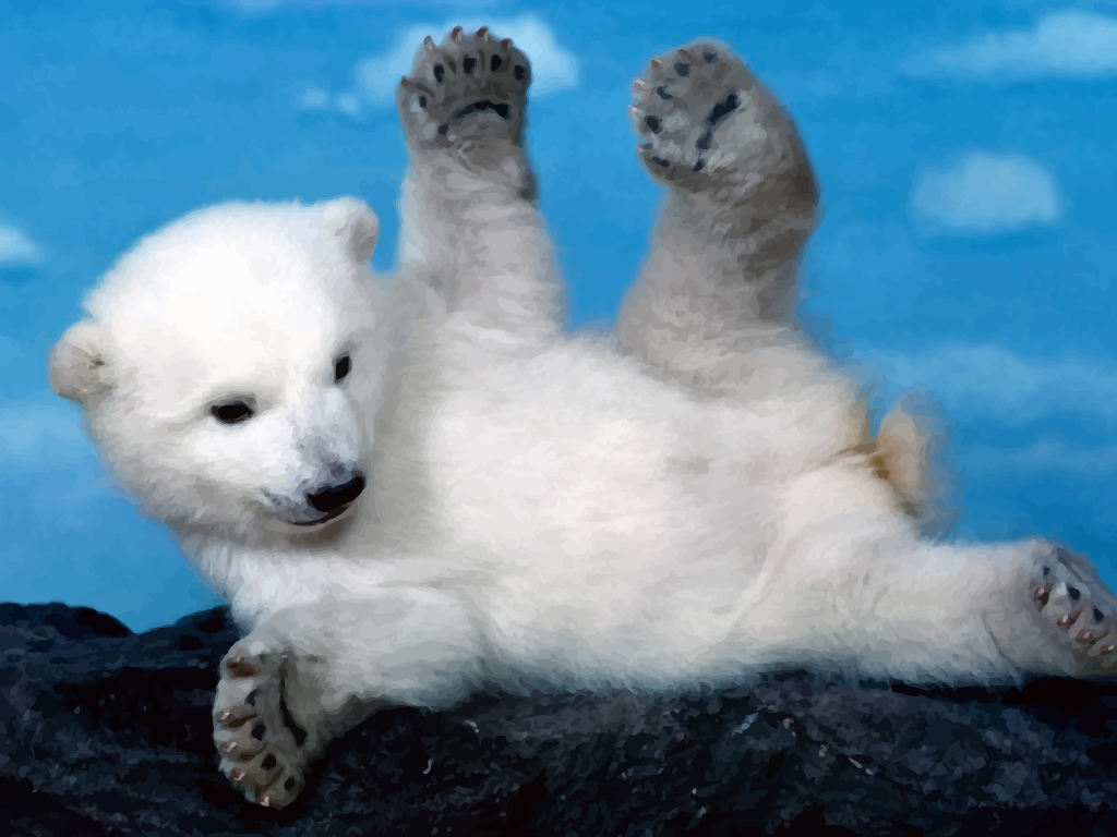 bany polar bear