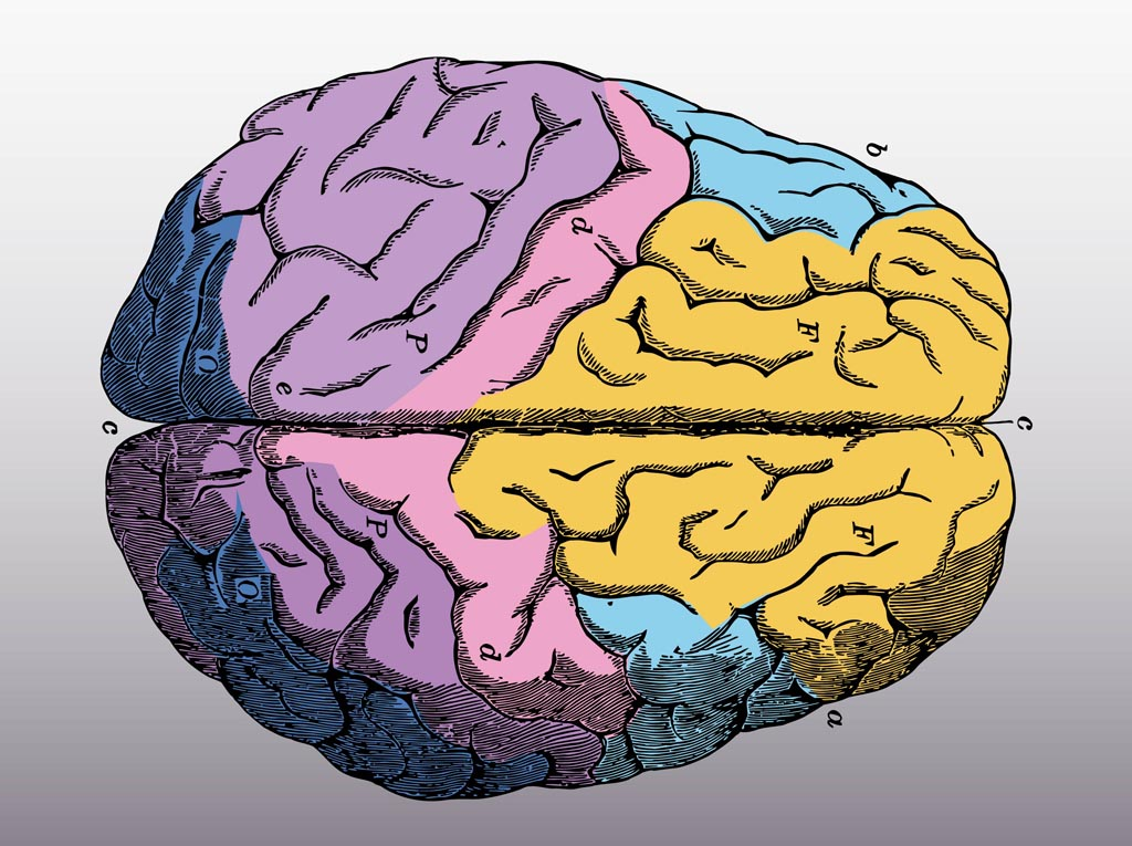 Colorful Brain Vector