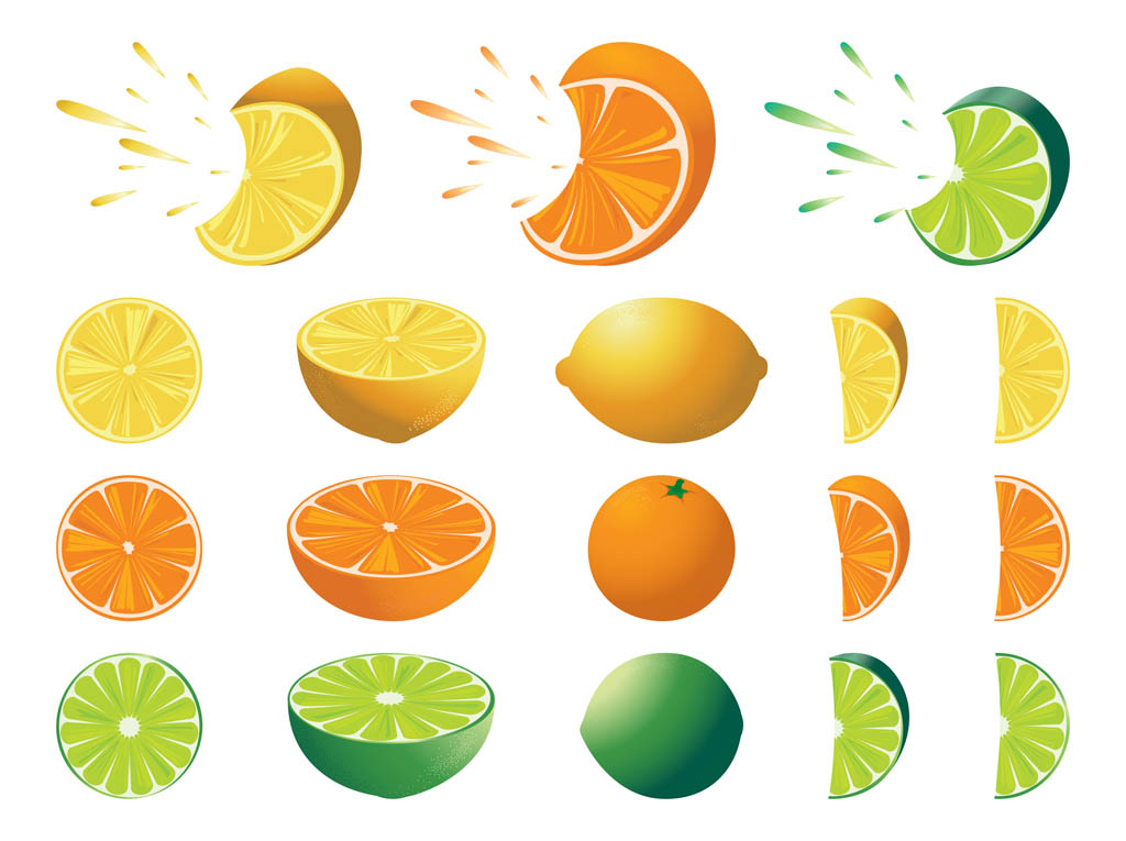 Orange Fruit Vector Citrus Fruits Set