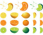 Citrus Fruits Set