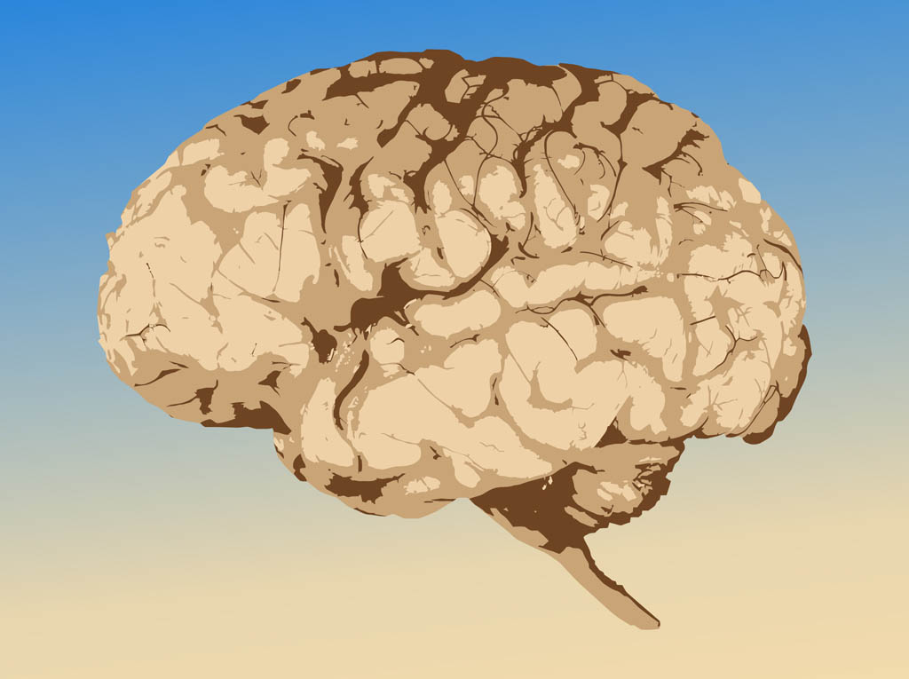 Brain Graphics