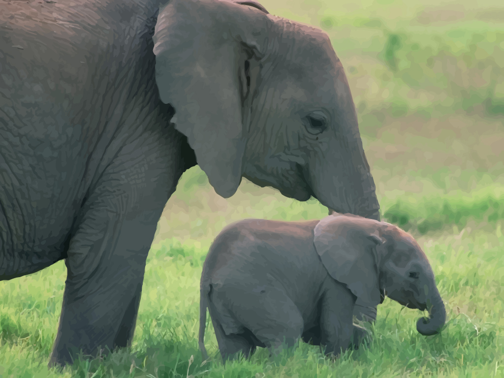 Elephant newborn baby - photo#18