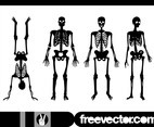 Human Skeletons Graphics