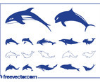 Dolphins Vector Graphics