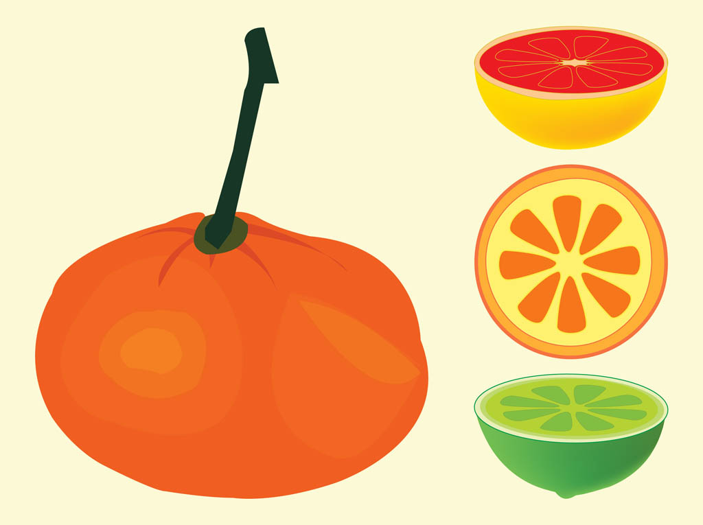 Orange Fruit Vector Citrus Fruits Vectors
