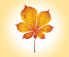 Autumn Leaf Vector Graphics