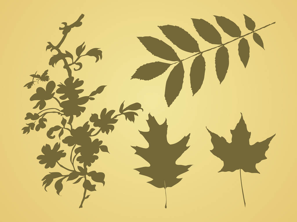 Leaves Vector Graphics