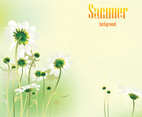 Summer Daisy Vector Background