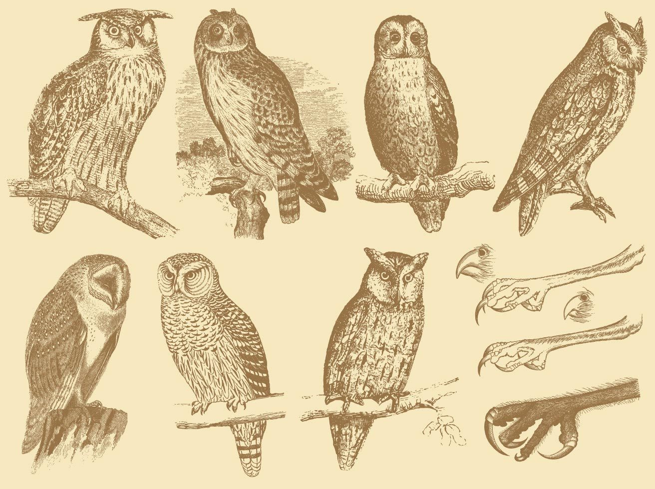 Old Style Drawing Owls