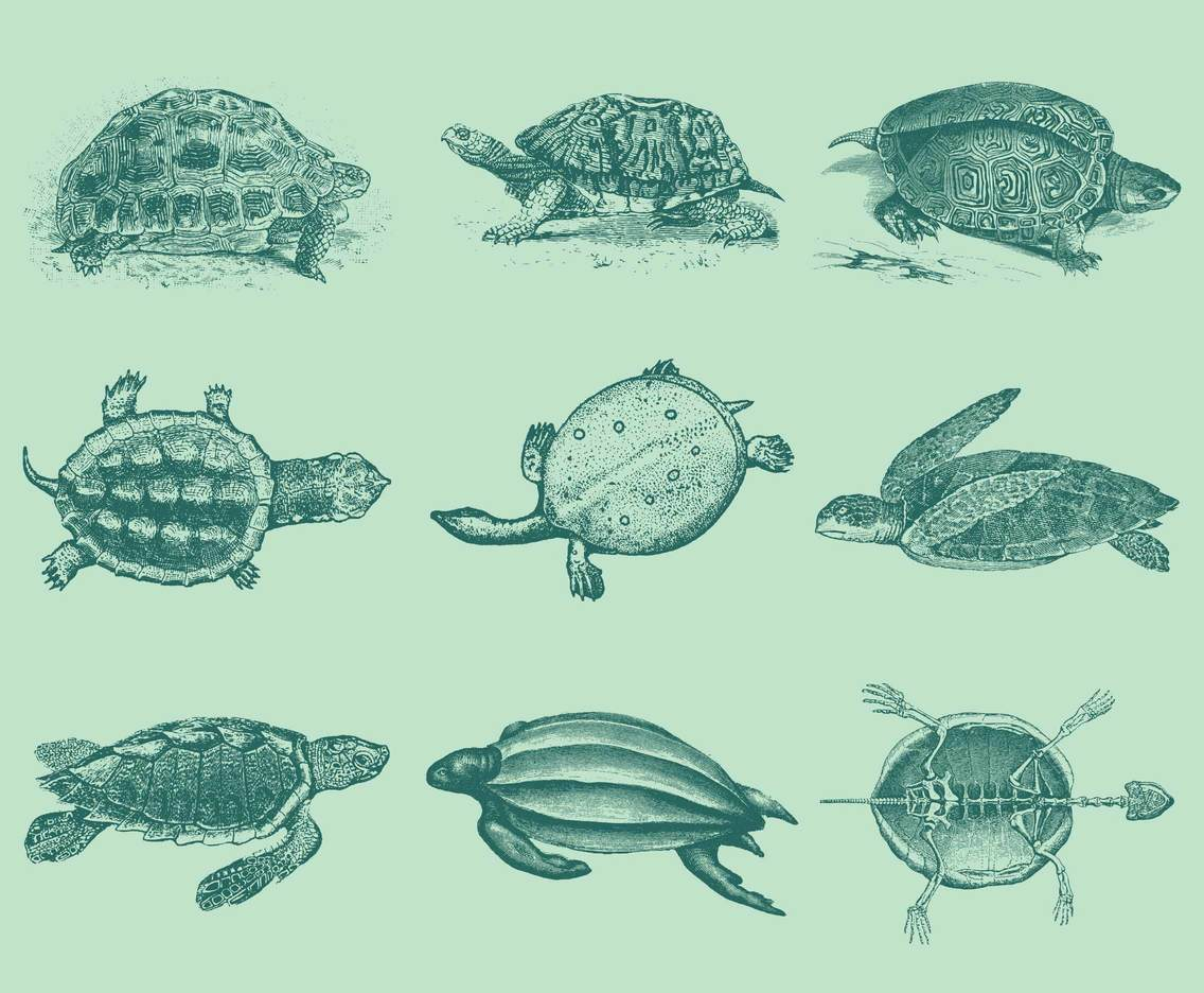 Old Style Drawing Turtles