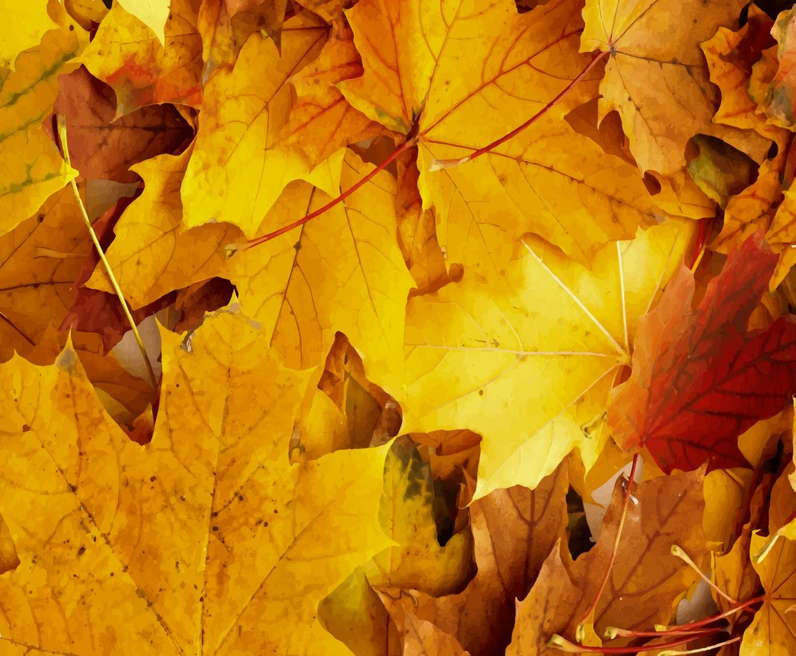 Vector Autumn Leaves/Fall Vector Background