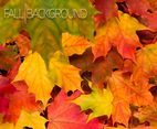 Vector Fall Background With Autumn Leaves