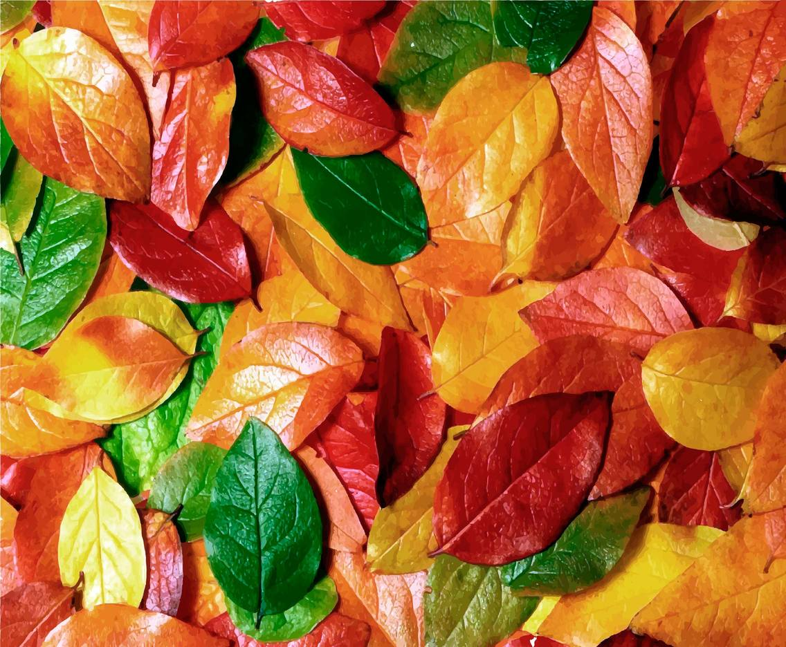 Vector Autumn Background With Colorful Autumn Leaves
