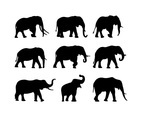 Set Of Elephant Silhouette