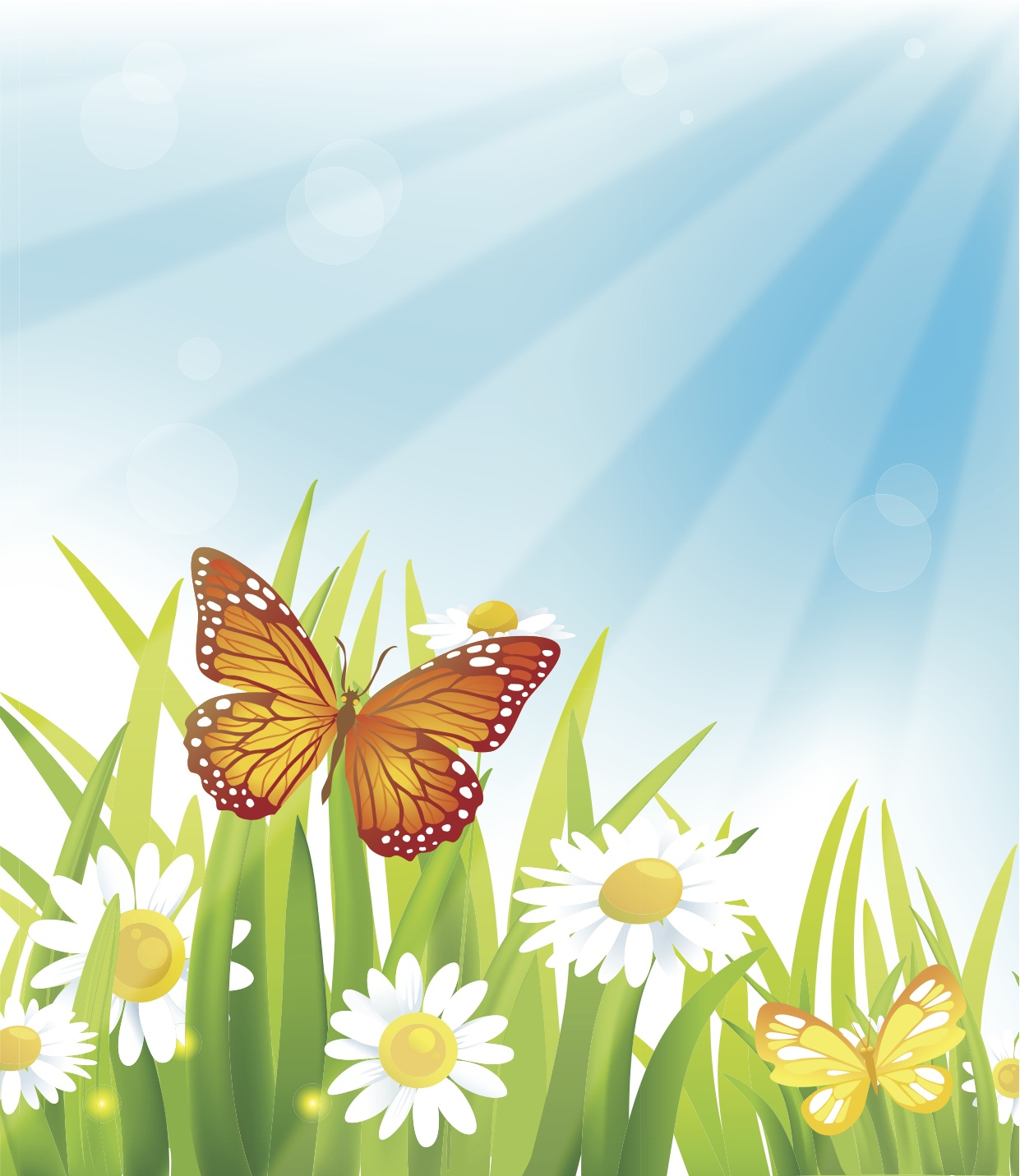 Butterfly Summer Vector Background