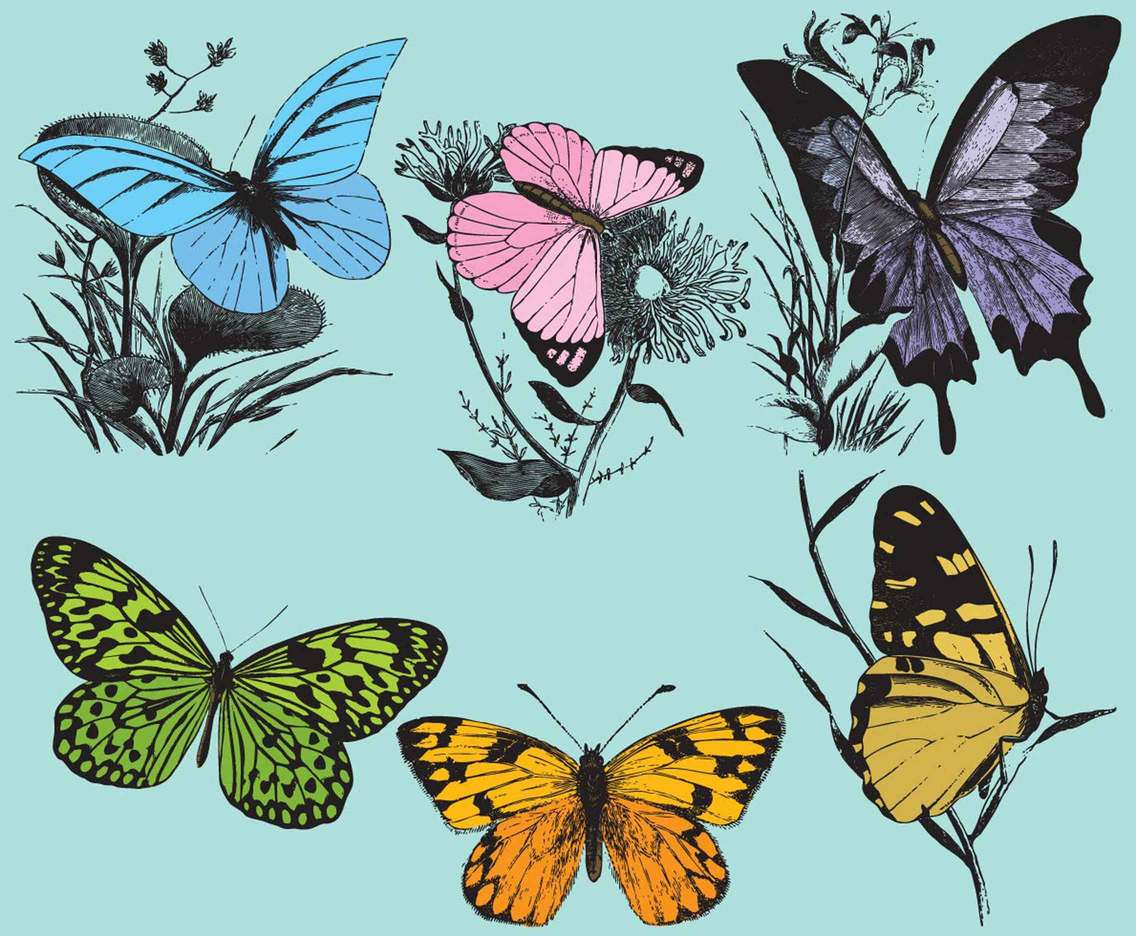 Vintage Colorful Butterflies