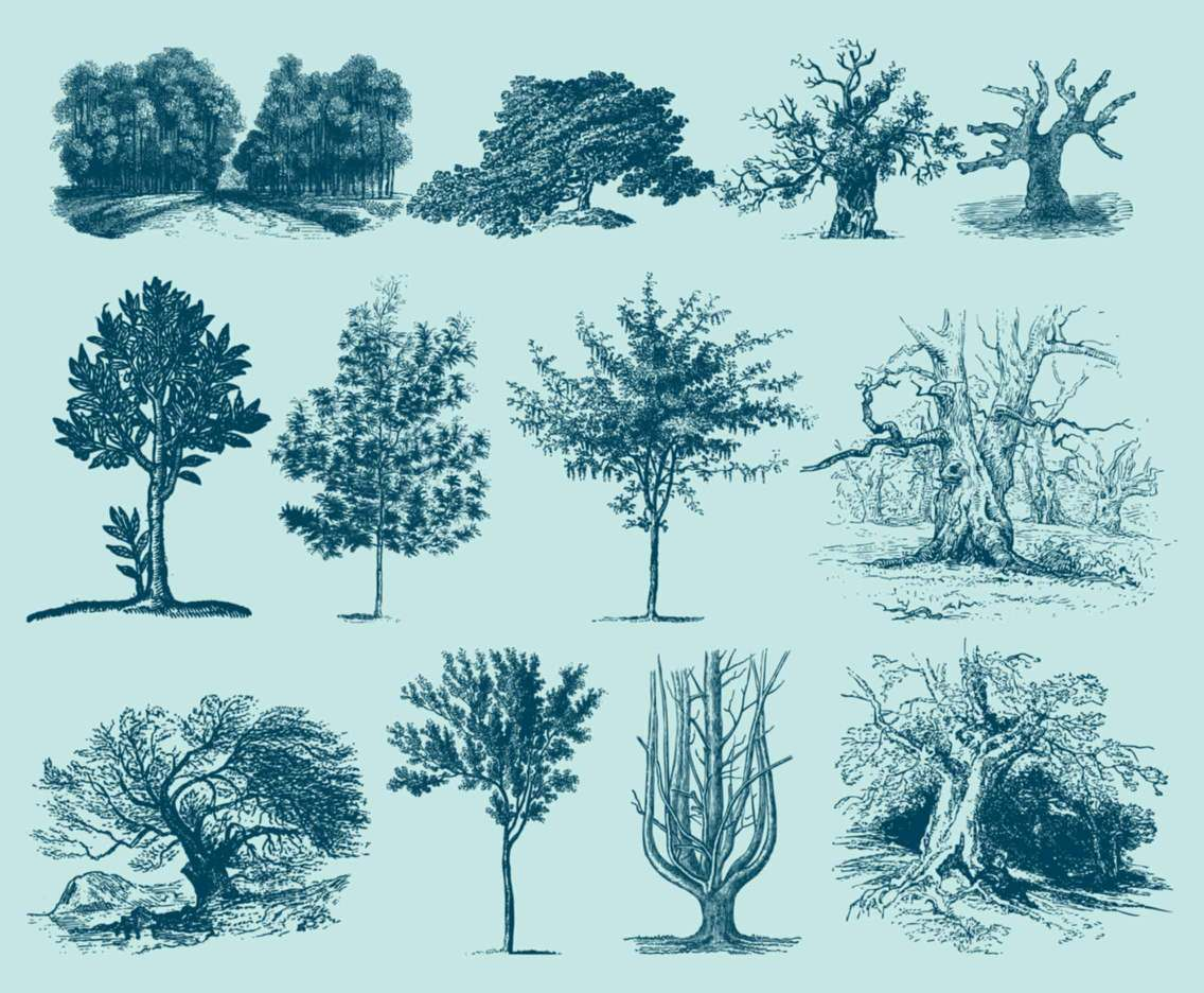 Blue Trees Illustrations