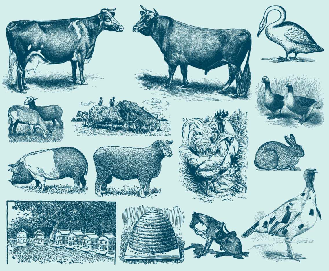 Blue Farm Animal Illustrations