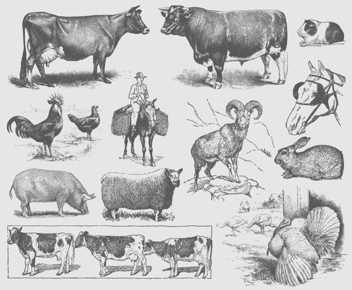 Gray Farm Animal Illustrations