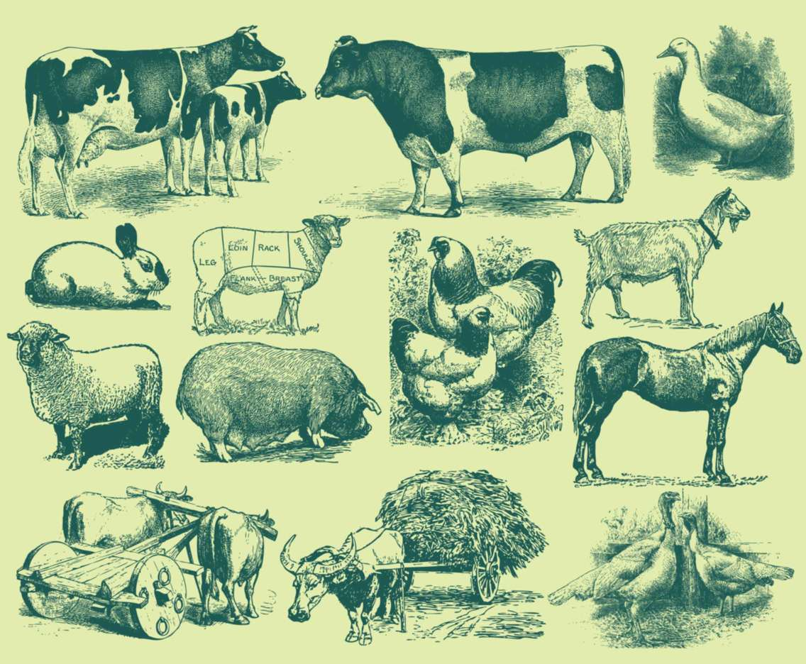 Green Farm Animal Illustrations