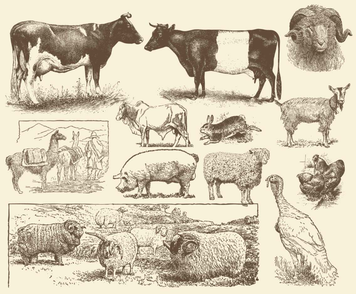 Sepia Farm Animal Illustrations