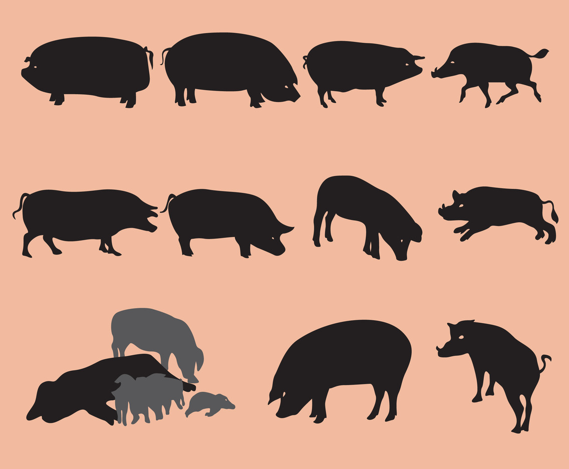 Pig And Wildpig Silhouettes