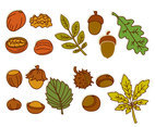 Nuts And Leaves Vector Collection