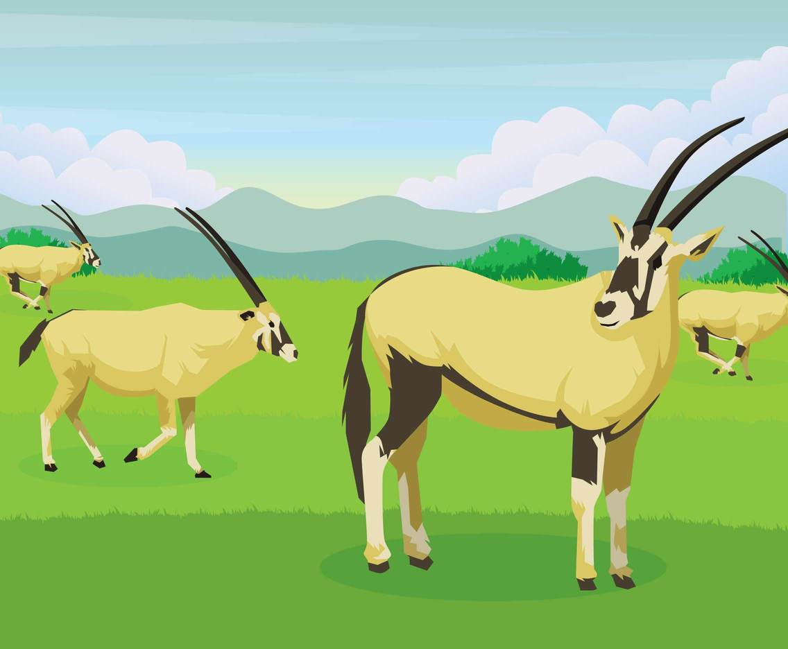 Free Oryx illustration