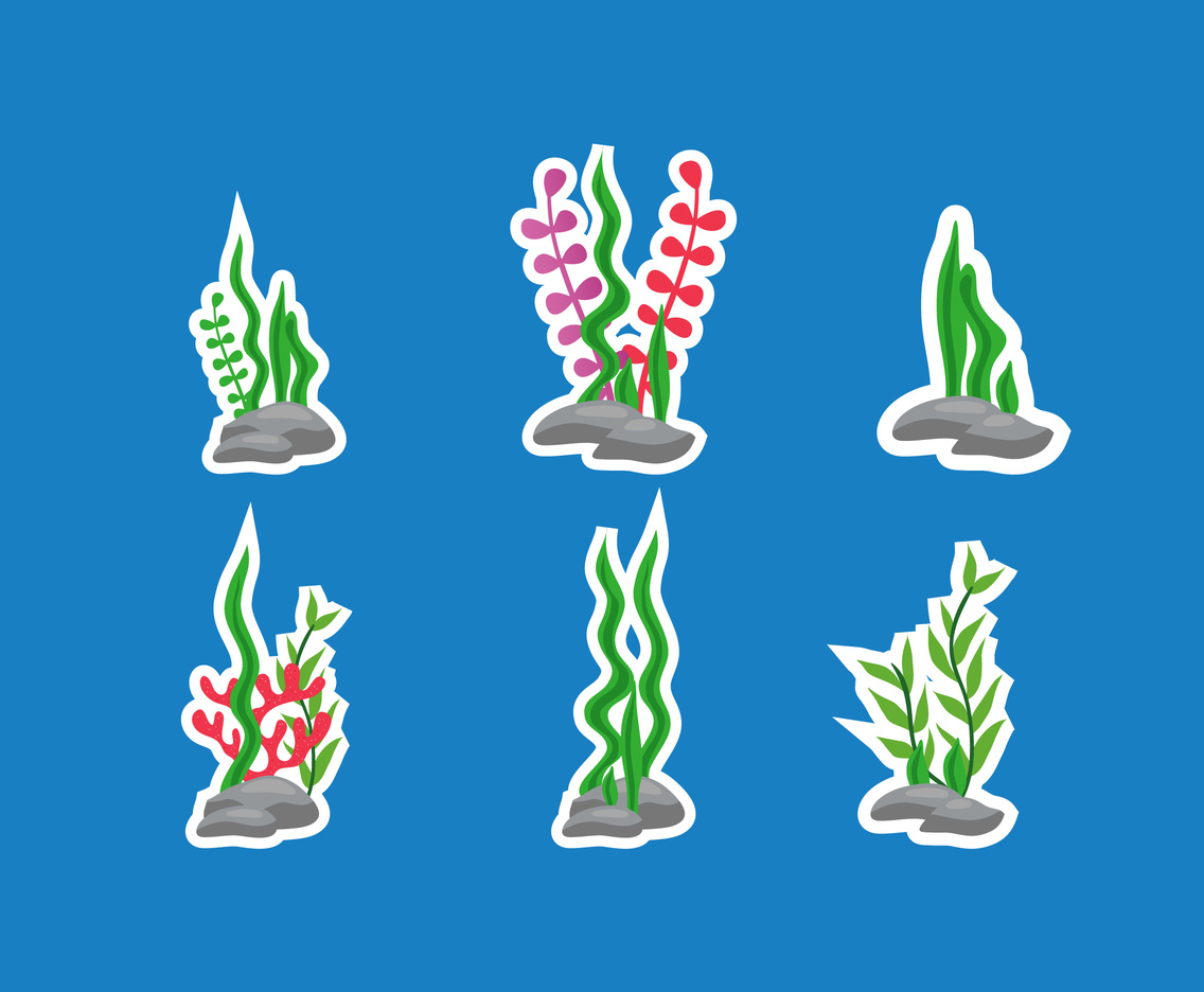 Six Seaweed Design