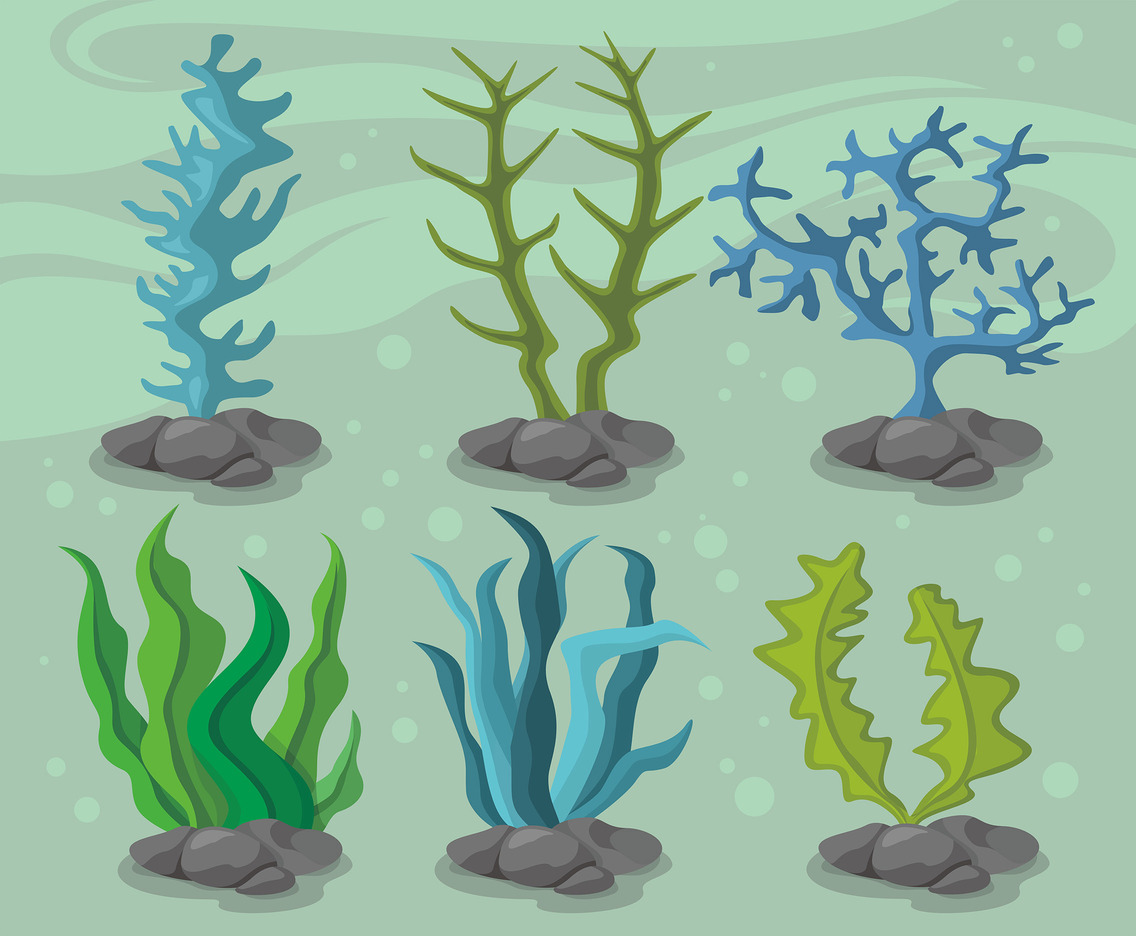 Seaweed Vector Design