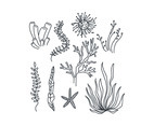 Black and White Seaweeds