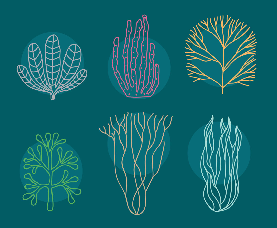 Seaweed And Coral Vector Set
