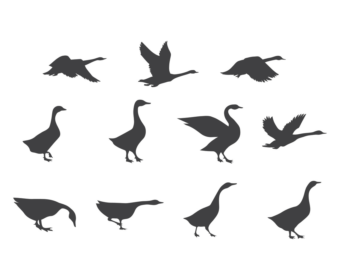 Vector Set of Swan Silhouettes