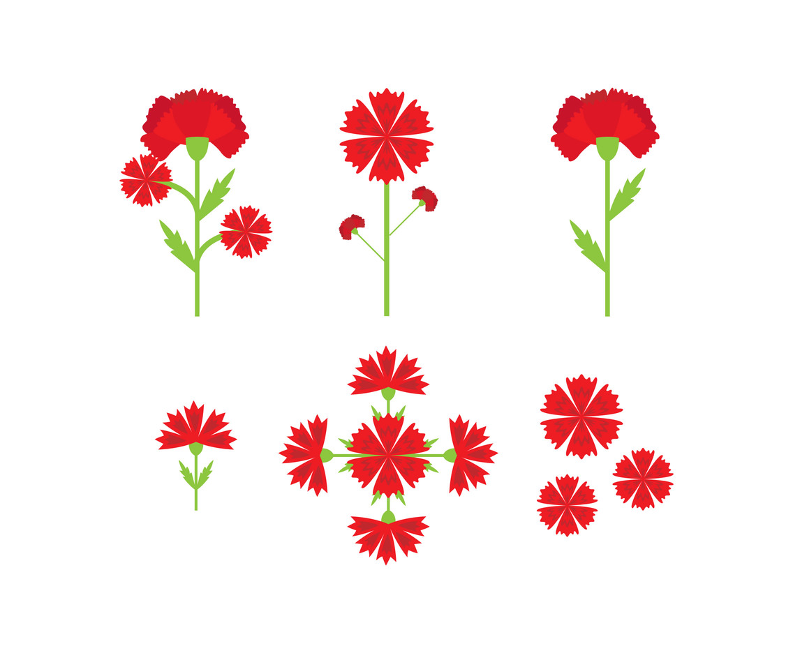 32acad9d00650 Blooming Carnation Flower Vector Art & Graphics | freevector.com