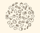 Sketch Of Various Nuts Vector