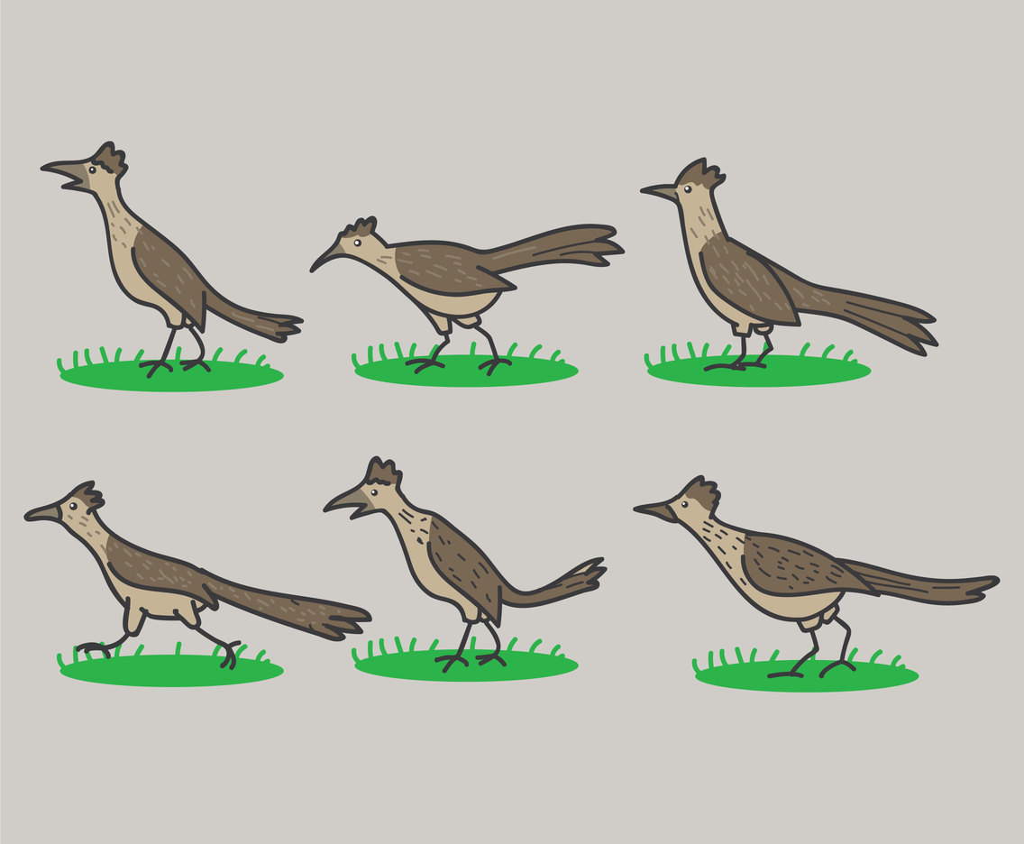 Cartoon Roadrunner Vectors