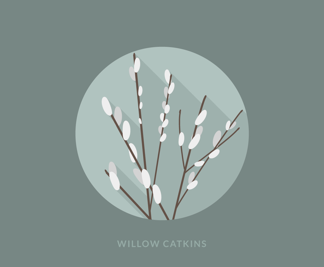 Flat Willow Catkins