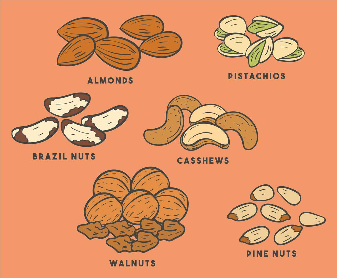 Hand Drawn Nuts Vectors
