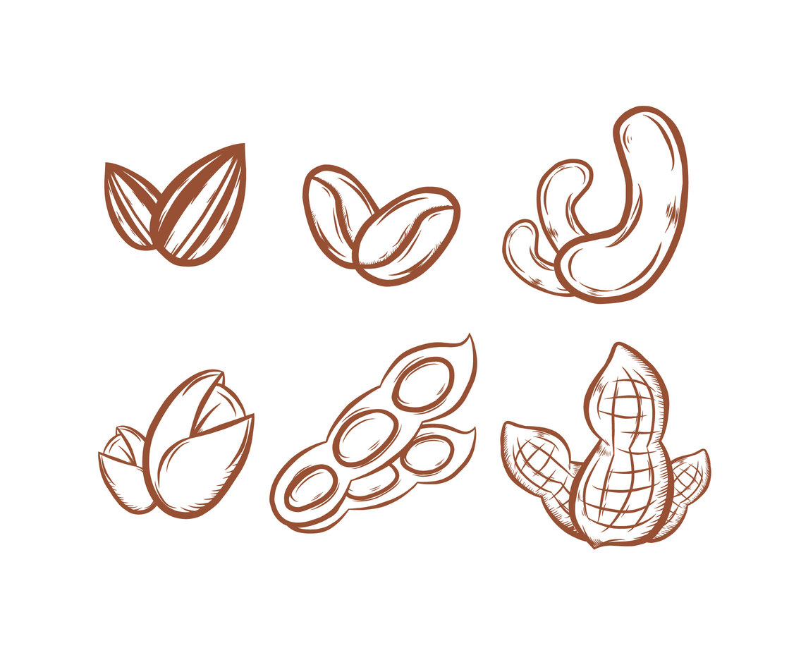 Sketchy Nuts Illustration Vector
