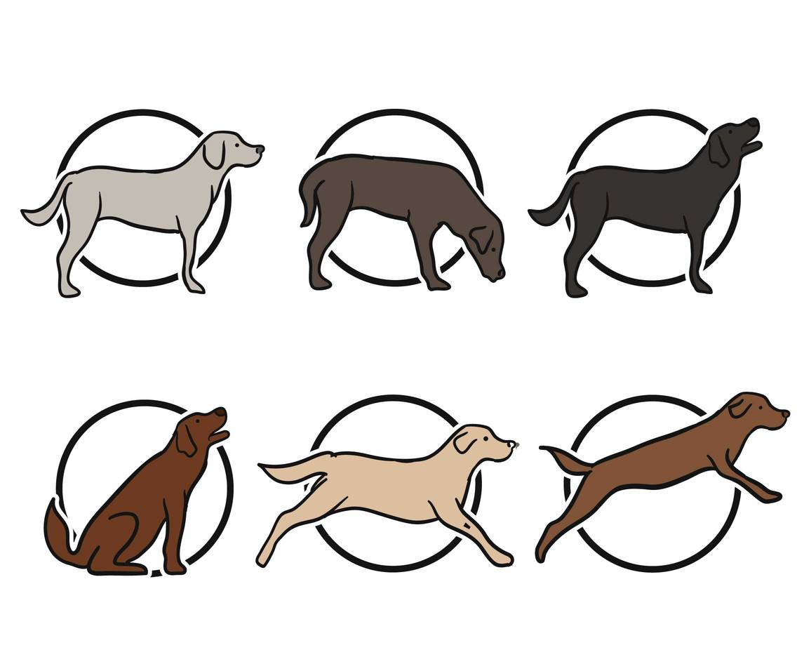 Labrador vector set