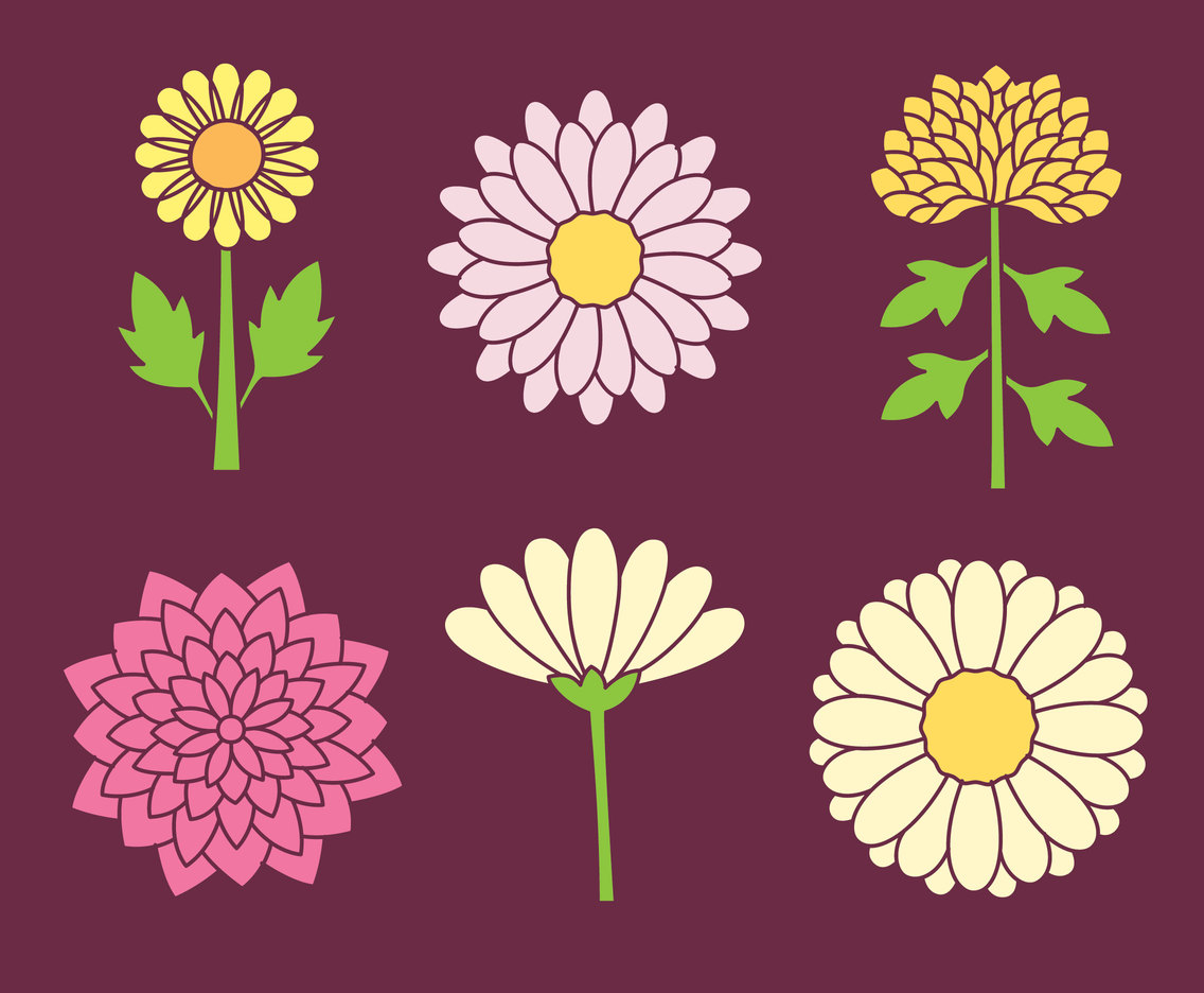 Chrysanthemum Flowers Collection Vector