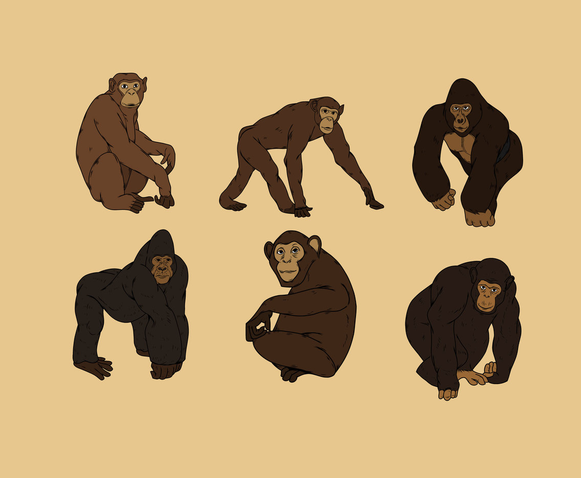 Gorilla and Chimp Vector