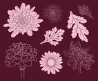 Flower And Leaf Chrysanthemum Hand Drawn